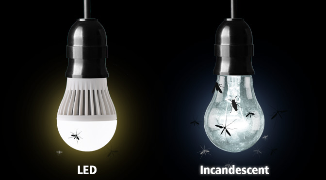 Led vs incandescent bugs