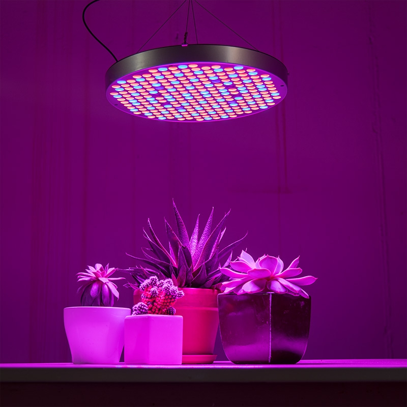 4-band full spectrum LED Grow Light - Circular 32W installed