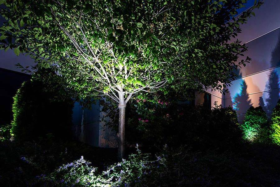 10 Watt LED Flood Light Fixture   Low Profile: Shown Illuminating Tree In  Garden.