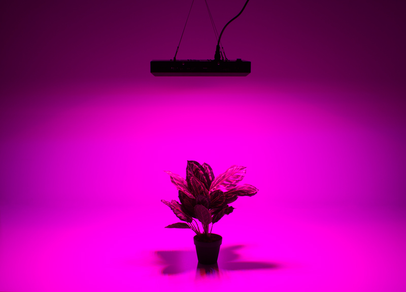 grow-light-2.jpg