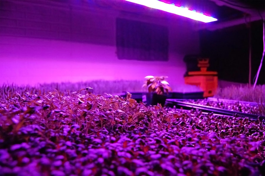 LED Grow Light Panels Sprouting Early Plants