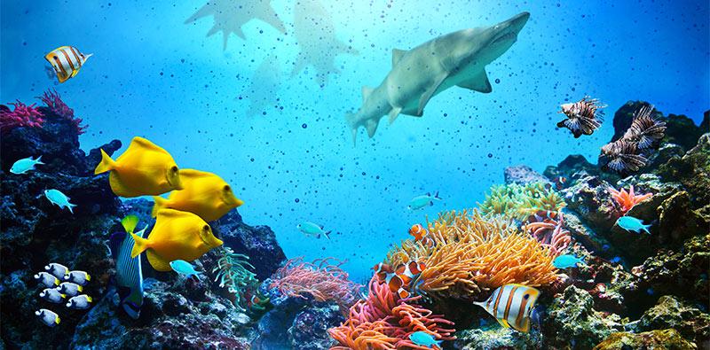 skylens fluorescent light diffuser ocean life decorative light
