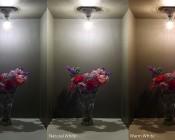 5W Candelabra LED Decorative Bulb: Cool, Natural, and Warm White Comparison