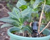 SPL Landscape Spotlight in Plant