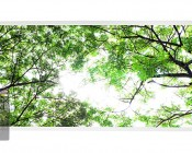 Tunable White LED Skylight w/ Forest Boughs SkyLens® - 2x4 Dimmable LED Panel Light - Drop Ceiling Recessed Mount