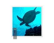 Tunable White LED Skylight w/ Sea Turtle SkyLens® - 2x2 - Dimmable - Drop Ceiling Recessed Mount