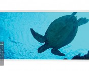 Tunable White LED Skylight w/ Sea Turtle SkyLens® - 2x4 - Dimmable - Drop Ceiling Recessed Mount