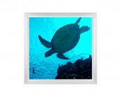 LED Skylight w/ Sea Turtle Skylens® - 2x2 - Dimmable - Flush Mount/Drop Ceiling Recessed Mount