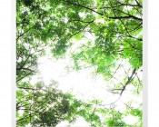 LED Skylight w/ Forest Boughs Skylens® - 2x2 Dimmable LED Panel Light - Drop Ceiling Recessed Mount