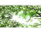 LED Skylight w/ Forest Boughs Skylens® - 2x4 Dimmable LED Panel Light - Drop Ceiling Recessed Mount