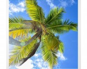LED Skylight w/ Palm Trees Skylens® - 2x2 Dimmable LED Panel Light - Drop Ceiling Recessed Mount