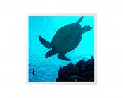 LED Skylight w/ Sea Turtle SkyLens® - 2x2 - Dimmable - Drop Ceiling Recessed Mount