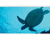 LED Skylight w/ Sea Turtle Skylens® - 2x4 - Dimmable - Drop Ceiling Recessed Mount