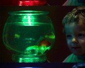 Mini Recessed LED Accent Light - 1 Watt: Shown Illuminating Fish Bowl In Red, Green, And Blue From Outside The Bowl (Not Waterproof).