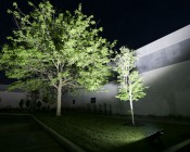 LED Area Light - 200W (650W HID Equivalent) - 5300K - 22,000 Lumens: Aimed at Trees on Side of Commercial Building