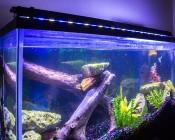 "46"" High Power LED Aquarium Light Fixture: On Top Of 55 Gallon Fish Tank"