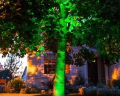 LED In-Ground Well Light - 3 Watt: Installed in Ground Shining Up Tree