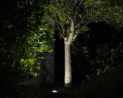 Dimmable LED In-Ground Well Light - 15 Watt Equivalent - 160 Lumens: Illuminating Through tree