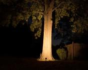 10 Watt Landscape LED Spotlight w/ Mounting Spike Aimed At Tree