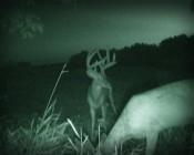 IR LED Spot Light deer night vision camera