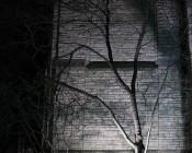High Power 50W LED Flood Light Fixture: Illuminating Tree And Wall Washing Building.