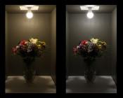 A21 LED Globe Bulb - 12 Watt - Dimmable: Comparision On Shot (Warm White Vs Natural White)