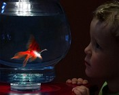 Submersible RGB LED Accent Light with Infrared Remote: Placed Under Fishbowl