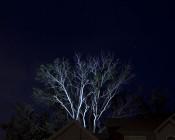 LB25-CW18W On Large Tree in Backyard