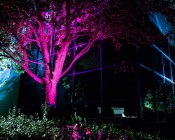 G-LUX series Color Changing RGB LED Spot Light: Installed Below Tree
