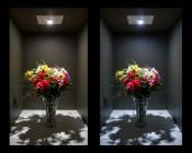 MR16 LED Bulb - 4 LED Spotlight Bi-Pin Bulb: Shown On In Natural White (Left) And Cool White (Right).