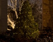 Solar Powered LED Fairy Lights w/ Copper Wire - 32'