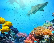 Skylens® Fluorescent Light Diffuser - Ocean Life Decorative Light Cover - 2' x 4'