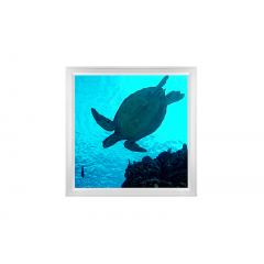 LED Skylight w/ Sea Turtle Skylens® - 2x2 - Dimmable - Surface Mount/Drop Ceiling