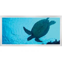 LED Skylight w/ Sea Turtle Skylens® - 2x4 - Dimmable - Flush Mount/Drop Ceiling