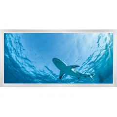 LED Skylight w/ Lone Shark Skylens® - 2x4 - Dimmable - Flush Mount/Drop Ceiling