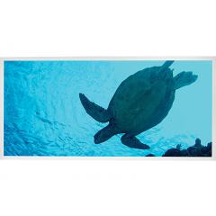 LED Skylight w/ Sea Turtle Skylens® - 2x4 - Dimmable - Drop Ceiling