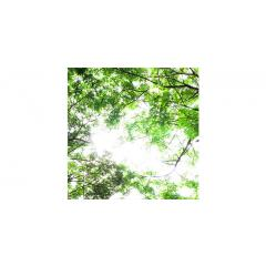 Skylens® Fluorescent Light Diffuser - Forest Boughs Decorative Light Cover - 2' x 2'