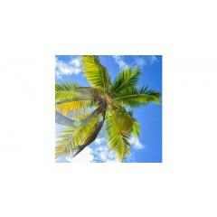 Skylens® Fluorescent Light Diffuser - Palm Trees Decorative Light Cover - 2' x 2'