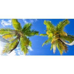 Skylens® Fluorescent Light Diffuser - Palm Trees Decorative Light Cover - 2' x 4'
