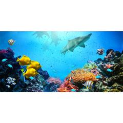 Skylens® Fluorescent Light Diffuser - Ocean Life Decorative Light Cover - 2' x 4'