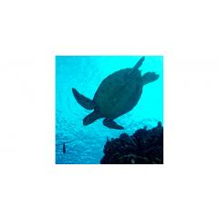 Skylens® Fluorescent Light Diffuser - Sea Turtle Decorative Light Cover - 2' x 2'