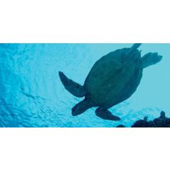 Skylens® Fluorescent Light Diffuser - Sea Turtle Decorative Light Cover - 2' x 4'