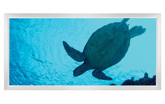 LED Skylight w/ Sea Turtle Skylens® - 2x4 - Dimmable - Flush Mount/Drop Ceiling - EGD-W2-x24