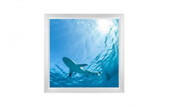 LED Skylight w/ Lone Shark Skylens® - 2x2 - Dimmable - Flush Mount/Drop Ceiling - EGD-W3-x22