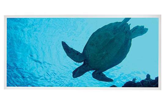 LED Skylight w/ Sea Turtle Skylens® - 2x4 - Dimmable - Drop Ceiling - EGD3-W2-x24-50