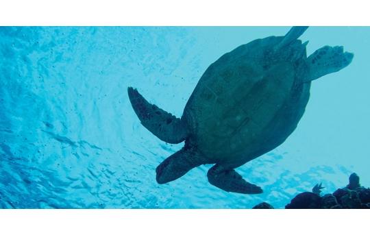 Skylens® Fluorescent Light Diffuser - Sea Turtle Decorative Light Cover - 2' x 4' - TRD-W2-24