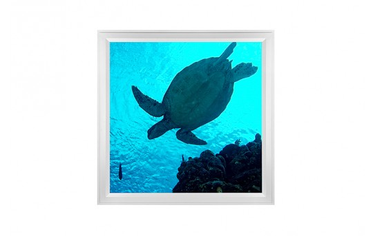 LED Skylight w/ Sea Turtle Skylens® - 2x2 - Dimmable - Flush Mount/Drop Ceiling - EGD-W2-x22