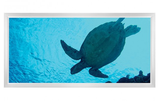 LED Skylight w/ Sea Turtle Skylens® - 2x4 - Dimmable - Flush Mount/Drop Ceiling - EGD-W2-x24