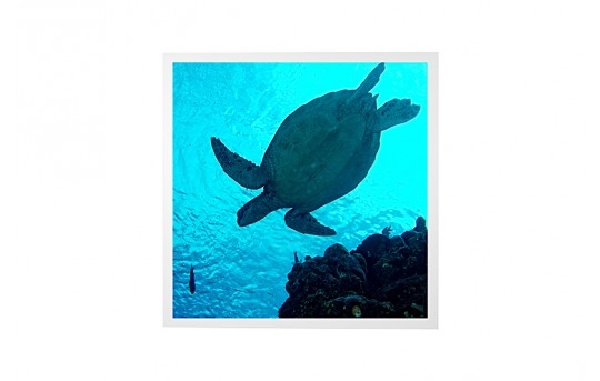 LED Skylight w/ Sea Turtle SkyLens® - 2x2 - Dimmable - Drop Ceiling Recessed Mount - EGD2-W2-x22
