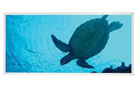 LED Skylight w/ Sea Turtle Skylens® - 2x4 - Dimmable - Drop Ceiling - EGD2-W2-x24